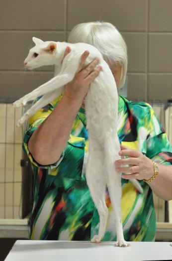 white Oriental being judged
