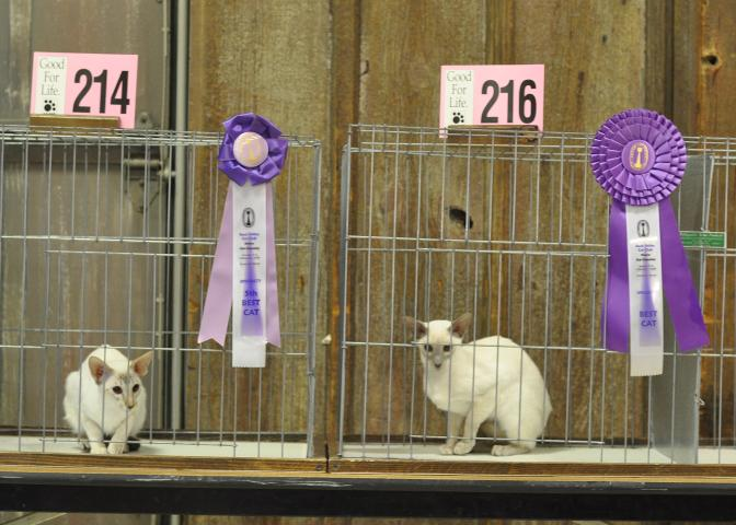 Champion Sahja's Jenna and Grand Champion Sahja's Glory in the Morning